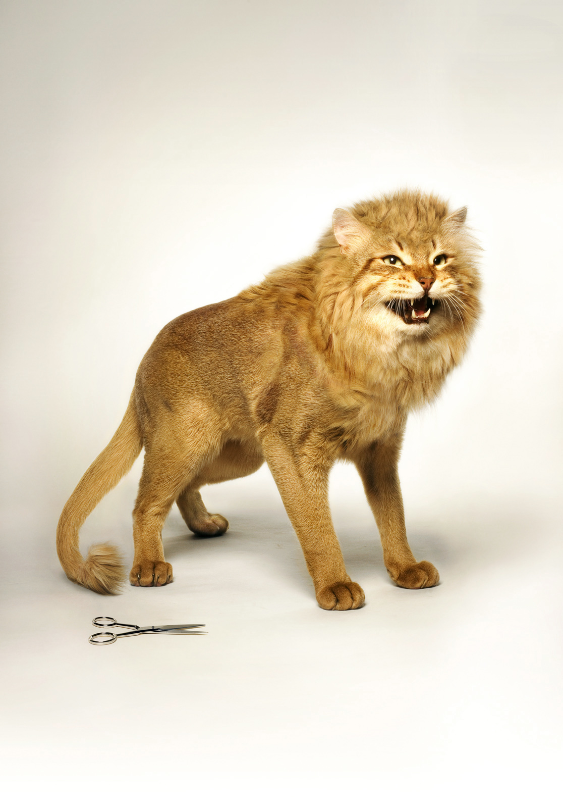 Catlion-Cannes young lions